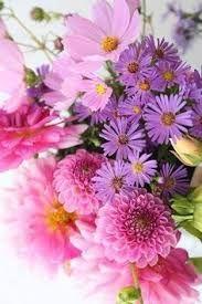 imagenes de flores para whatsapp gratis
